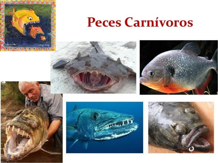Alimentando peces para alimentar tu futuro for Peces alimentacion