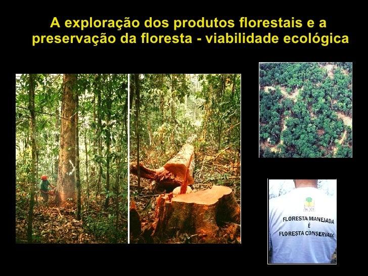 A exploração dos produtos florestais e a preservação da floresta - viabilidade ecológica