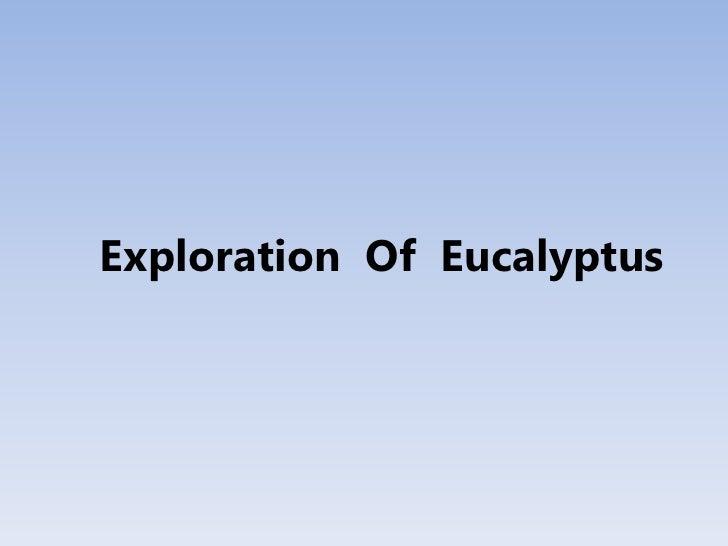 Exploration Of Eucalyptus