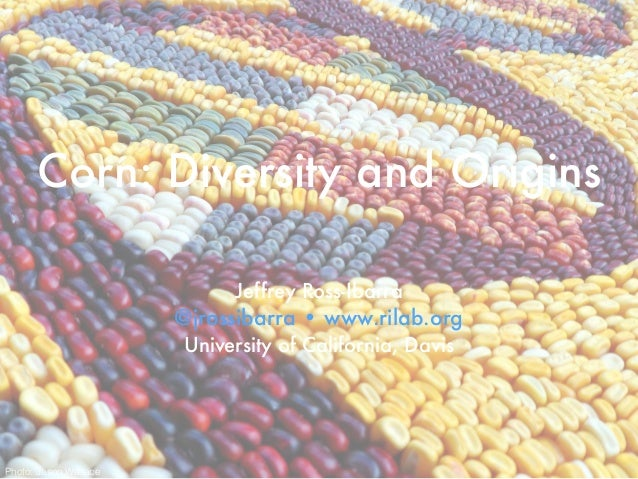 Corn: Diversity and Origins Jeffrey Ross-Ibarra @jrossibarra • www.rilab.org University of California, Davis Photo: Jason ...