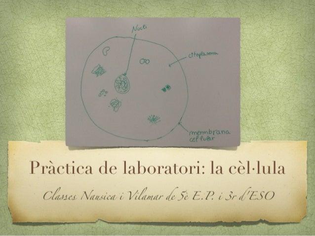 Explorem les cèl•lules animals i vegetals