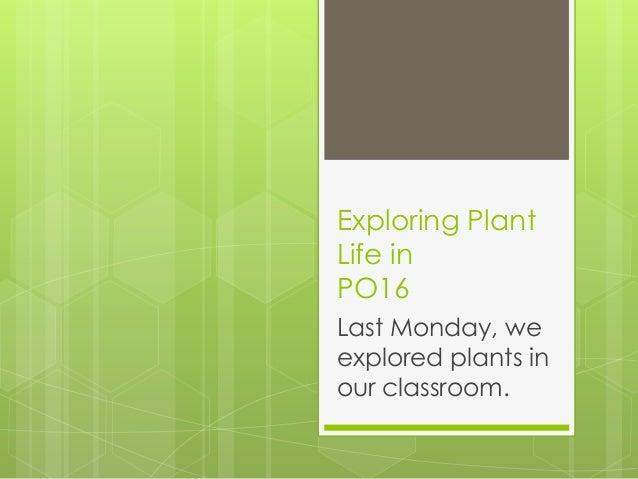 Exploring PlantLife inPO16Last Monday, weexplored plants inour classroom.