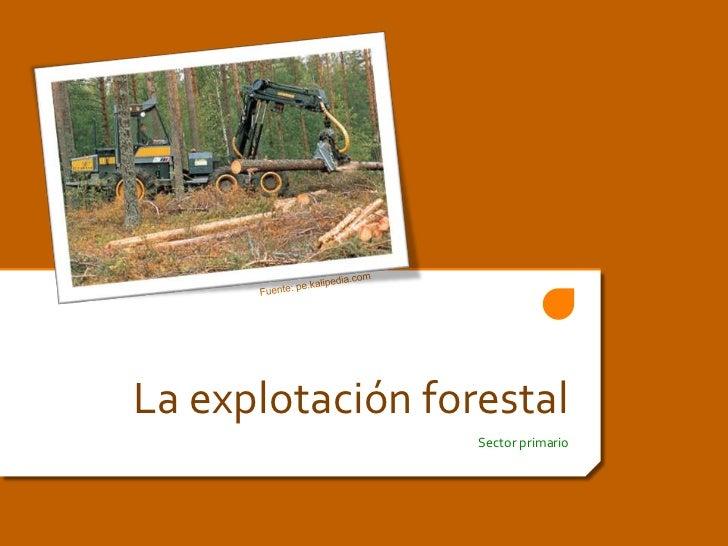 La explotación forestal<br />Sector primario<br />Fuente: pe.kalipedia.com<br />