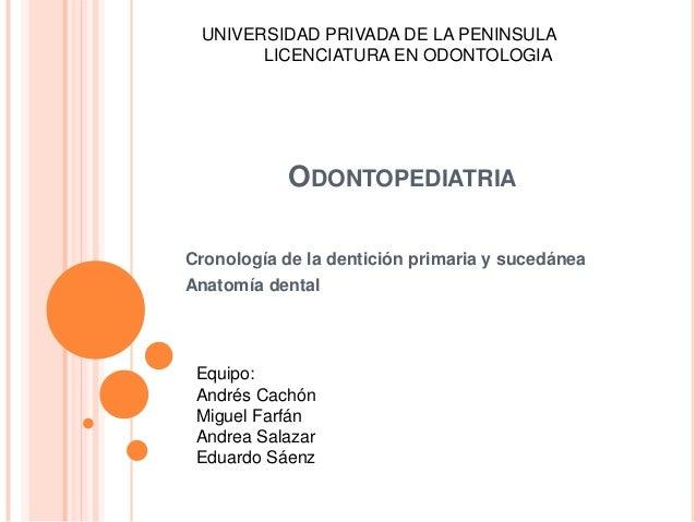 ODONTOPEDIATRIA Cronología de la dentición primaria y sucedánea Anatomía dental Equipo: Andrés Cachón Miguel Farfán Andrea...