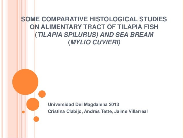SOME COMPARATIVE HISTOLOGICAL STUDIES ON ALIMENTARY TRACT OF TILAPIA FISH (TILAPIA SPILURUS) AND SEA BREAM (MYLIO CUVIERI)...
