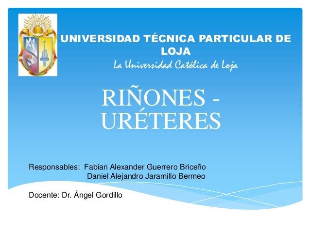UNIVERSIDAD TÉCNICA PARTICULAR DE LOJA  La Universidad Católica de Loja  RIÑONES URÉTERES Responsables: Fabian Alexander G...