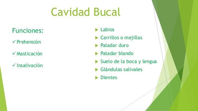 Cavidad Bucal  Labios  Carrillos o mejillas  Paladar duro  Paladar blando  Suelo de la boca y lengua  Glándulas sali...
