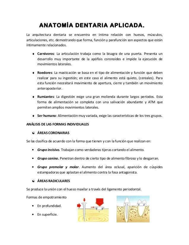Expo 2-anatomia-dentaria-aplicada