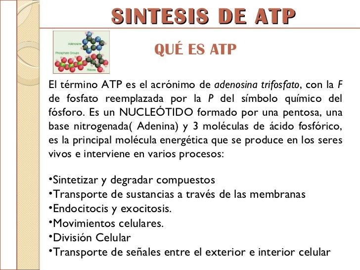 Expo sinstesis de atp for Que significa molecula