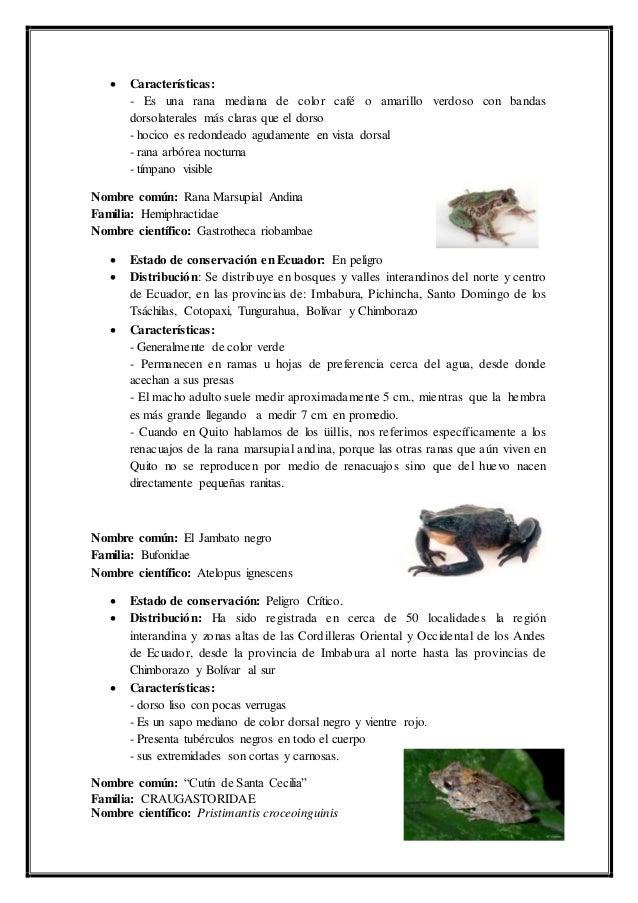 Expo de-fauna