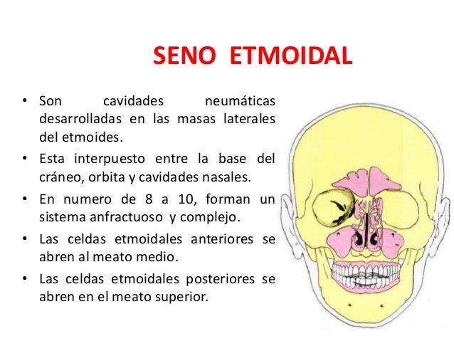 Anatomia de la nariz, senos paranasales y Faringe