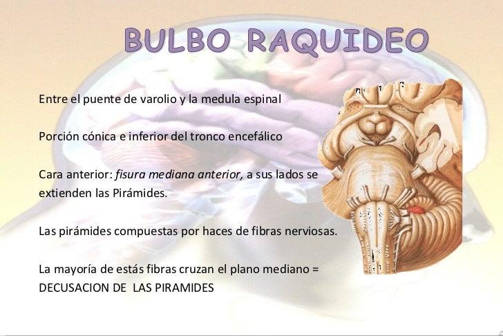 Excelente Anatomía De Un Puente Embellecimiento - Anatomía de Las ...