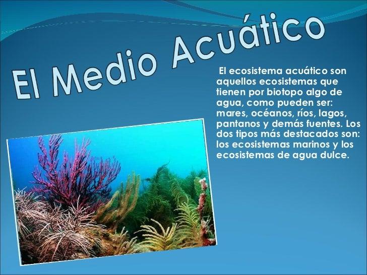 El ecosistema acuático son  aquellos ecosistemas que tienen por biotopo algo de  agua, como pueden ser: mares, océanos, rí...