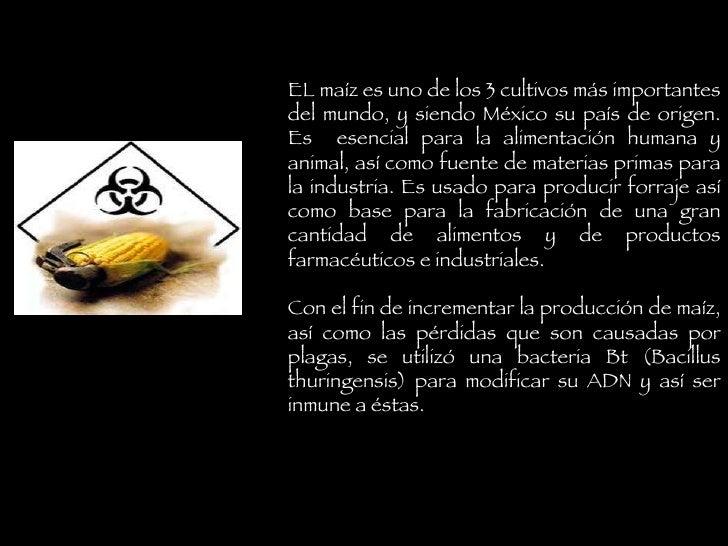 EL maíz es uno de los 3 cultivos más importantes del mundo,  y siendo México su país de origen. Es  esencial para la alime...