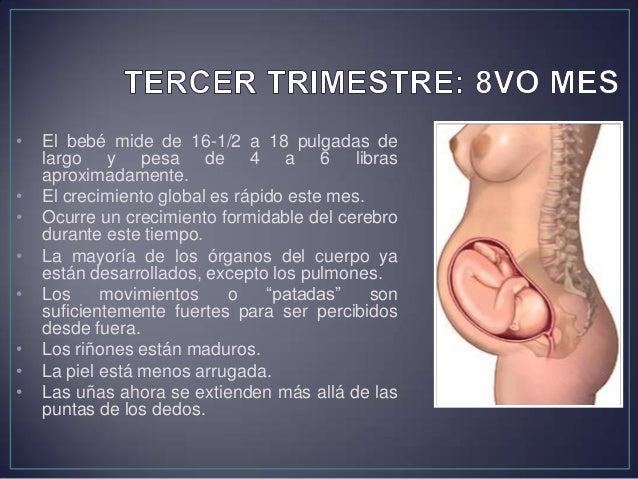 • El bebé mide de 19 a 20 pulgadas de largo. • Pesa de 7 a 7-1/2 libras aproximadamente. • Los pulmones están maduros. • E...