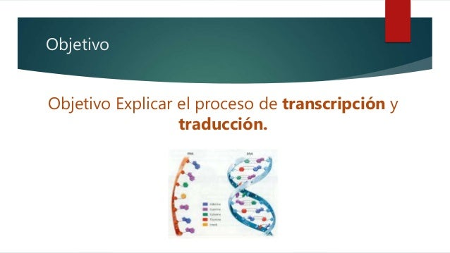 Sintesis de proteínas - Paso a paso. Slide 2