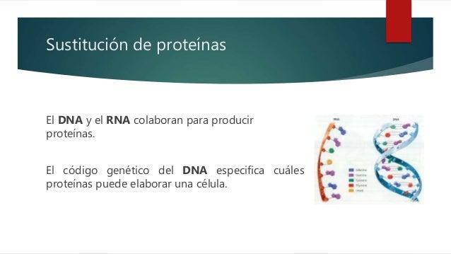 Sintesis de proteínas - Paso a paso. Slide 3