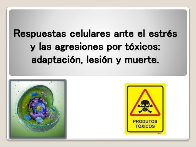 Respuestas celulares ante el estrés  y las agresiones por tóxicos:  adaptación, lesión y muerte.