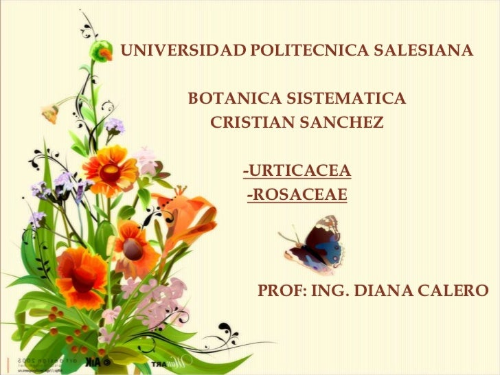 UNIVERSIDAD POLITECNICA SALESIANA      BOTANICA SISTEMATICA        CRISTIAN SANCHEZ           -URTICACEA            -ROSAC...