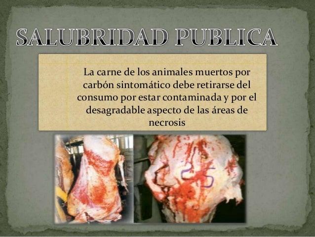 Expo carbon sintomatico