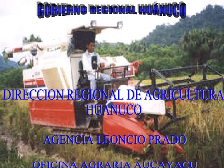 GOBIERNO REGIONAL HUÁNUCO DIRECCION REGIONAL DE AGRICULTURA HUÁNUCO AGENCIA LEONCIO PRADO OFICINA AGRARIA AUCAYACU