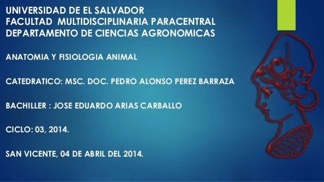 UNIVERSIDAD DE EL SALVADOR FACULTAD MULTIDISCIPLINARIA PARACENTRAL DEPARTAMENTO DE CIENCIAS AGRONOMICAS ANATOMIA Y FISIOLO...