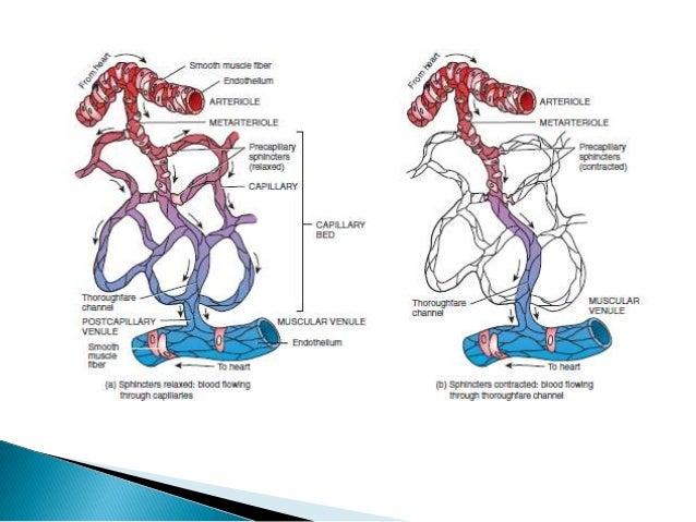 Anatomia y Fisiologia de la circulación sistemica y pulmonar
