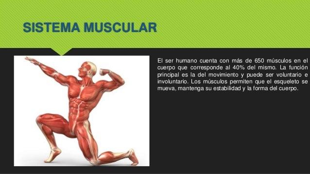 Sistema Tegumentario & Muscular