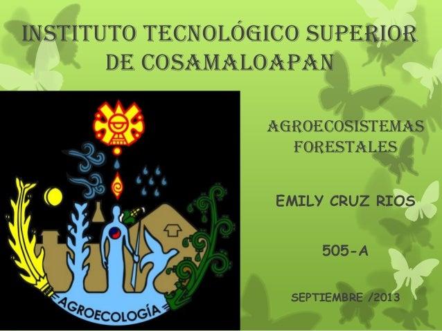 Instituto tecnológico superior de Cosamaloapan AGROECOSISTEMAS FORESTALES EMILY CRUZ RIOS 505-A SEPTIEMBRE /2013