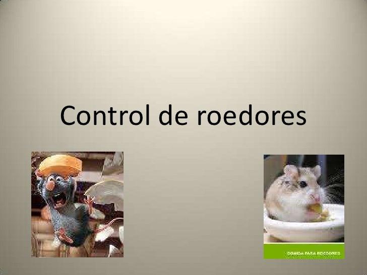 Control de roedores <br />