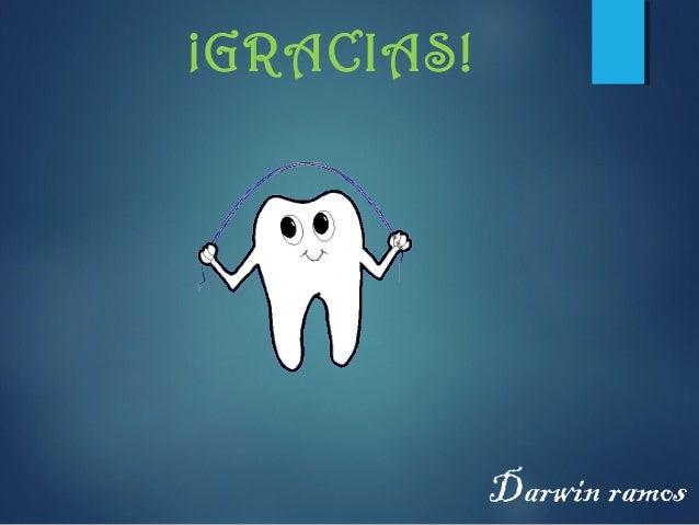partes del diente   l d r c