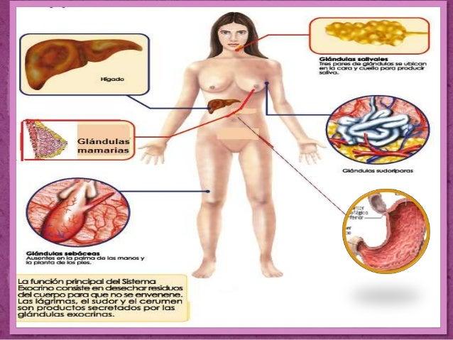El foro la operación el cáncer de mama