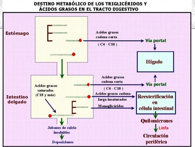 sugerencias de gran alcance en metabolismo de las proteínas