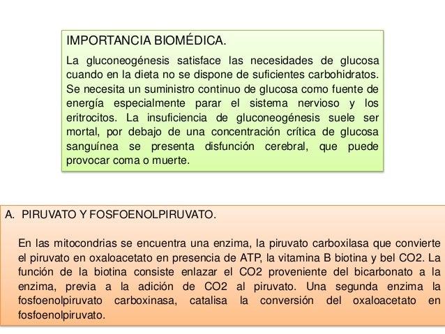 Expo,, gluconeogenesis y control de la glucosa en la sangre