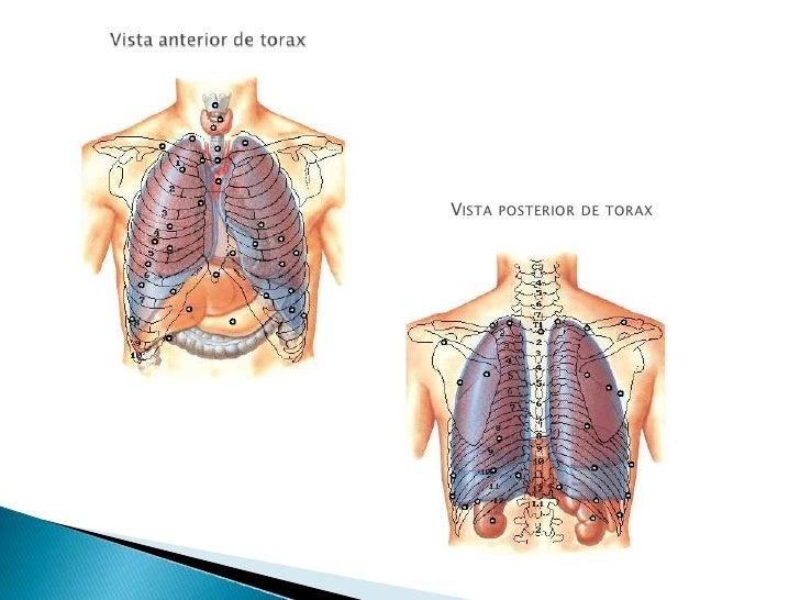 TAC Anatomia Torax