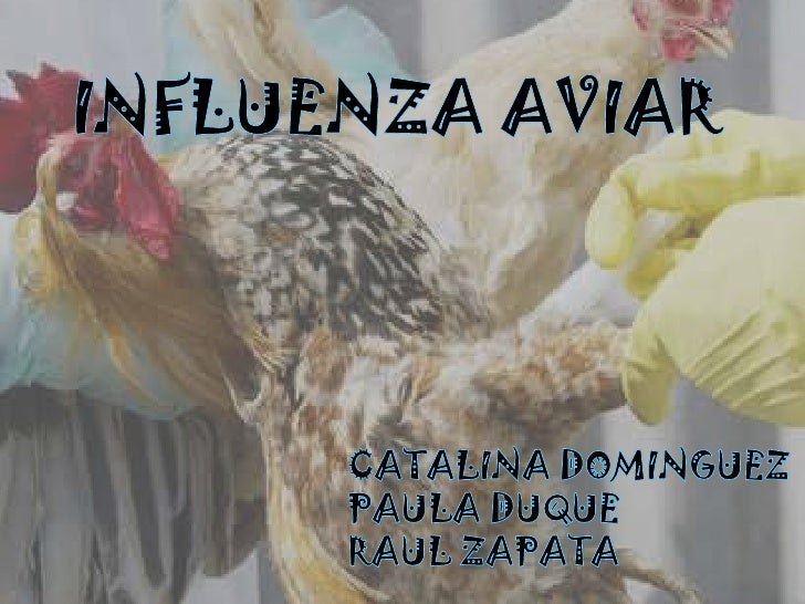 INFLUENZA AVIAR<br />CATALINA DOMINGUEZ<br />PAULA DUQUE<br />RAUL ZAPATA<br />