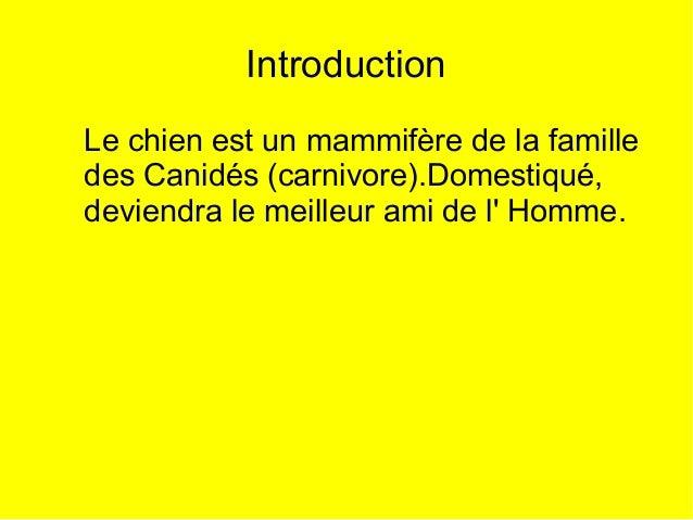 Introduction Le chien est un mammifère de la famille des Canidés (carnivore).Domestiqué, deviendra le meilleur ami de l' H...