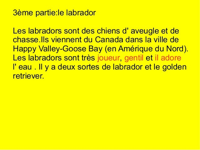 Quiz 1) Qu' elle sont les deux races de labrador ? Le labrador et le golden retriever. 2) Combien il y a t-il de races dan...