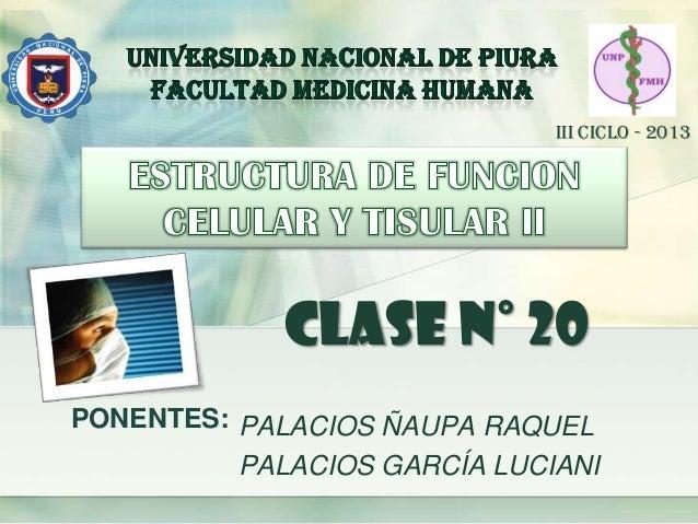 PONENTES: PALACIOS ÑAUPA RAQUEL PALACIOS GARCÍA LUCIANI CLASE N° 20 III CICLO - 2013
