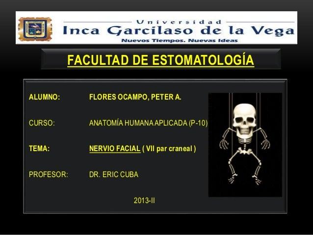 NERVIO FACIAL ( Anatomía Aplicada )