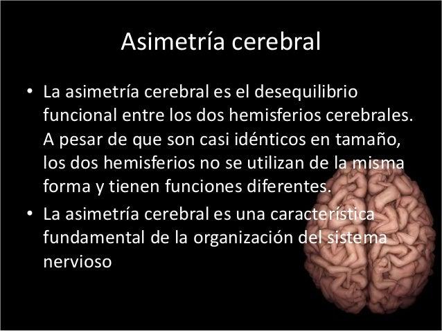 Asimetría cerebral  • La asimetría cerebral es el desequilibrio  funcional entre los dos hemisferios cerebrales.  A pesar ...
