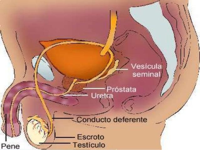 esteroides inyectados en las piernas