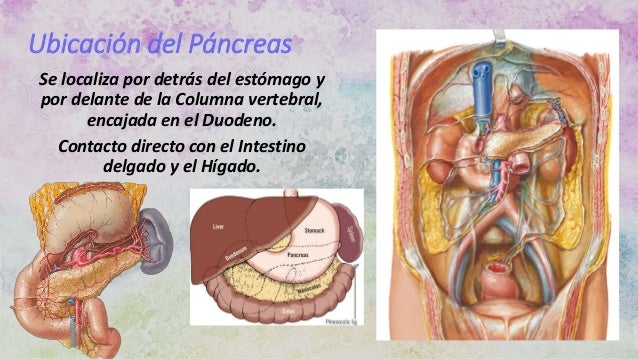 Expo páncreas