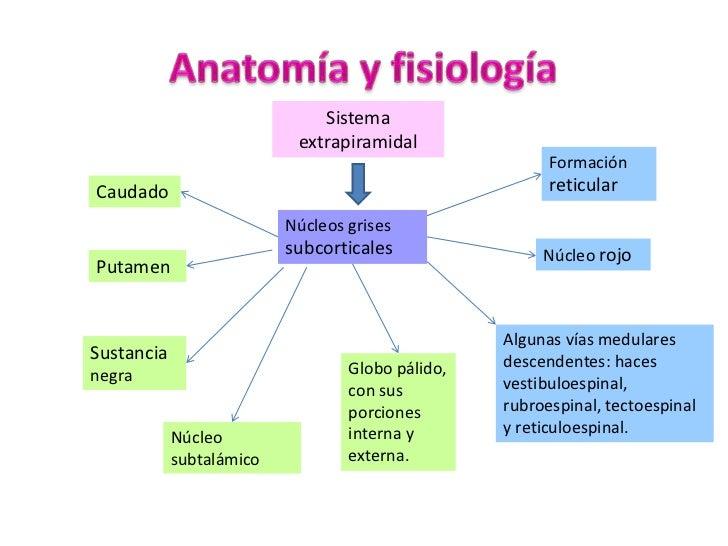 Anatomía y fisiología<br />Sistema extrapiramidal<br />Formación reticular<br />Caudado<br />Núcleos grises subcorticales<...
