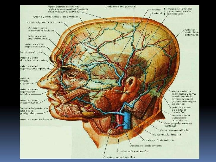 ExposicióN De Anatomia