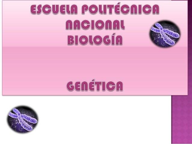 Presencia de múltiples sets de cromosomas: AloploideAutoploide