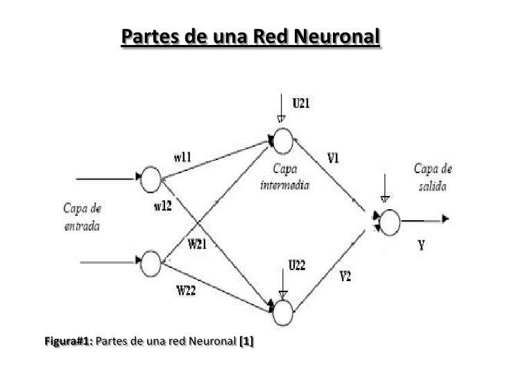 Partes de una Red Neuronal<br />Figura#1: Partes de una red Neuronal [1]<br />