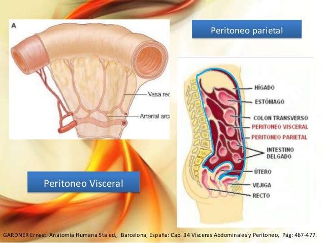 Anatomía de peritoneo y Peritonitis