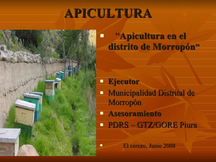 "APICULTURA <ul><li>"" Apicultura en el distrito de Morropón "" </li></ul><ul><li>Ejecutor </li></ul><ul><li>Municipalidad Di..."