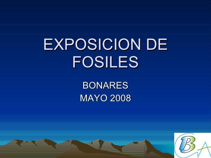 EXPOSICION DE FOSILES BONARES MAYO 2008